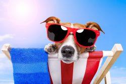Reisevorbereitungen für den Urlaub mit Hund