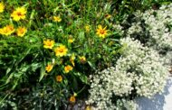 Pflanzen für den Garten